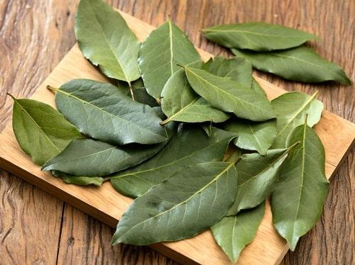 las hojas de laurel son abortivas